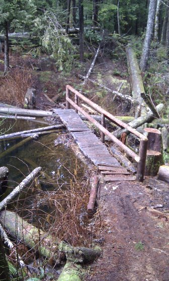 Bridge over beaver pond