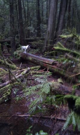 Log bridge over stream on Millipede