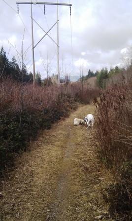 Trail under the powerline.