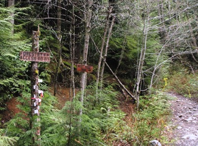 West Ridge trail sign and forest road sign