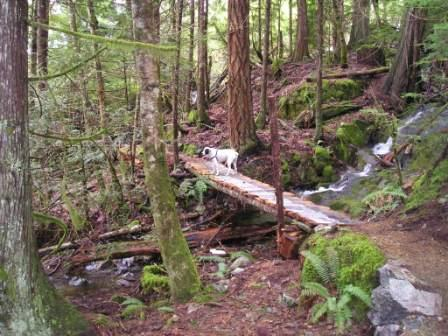 Bridge over creek on Cabin Fever