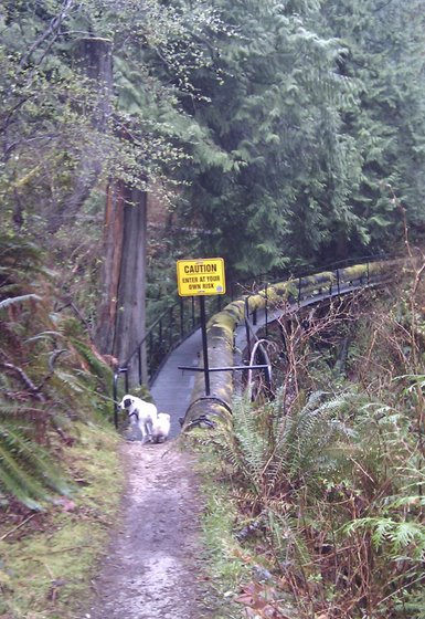 Caution sign just before the first bridge at Chapman Creek falls.