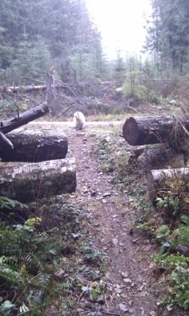 View of where Cabin Fever comes out to logging road